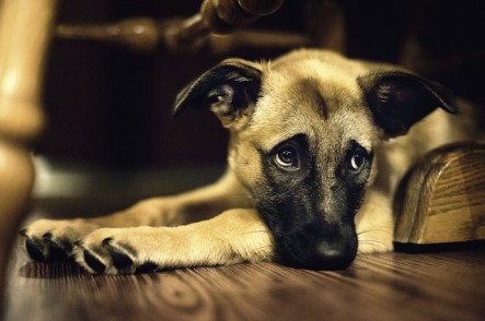 Why have we criminalized animal cruelty?
